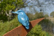Kingfisher 2 - sized