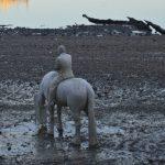 Dsc_3787 - man on horse h